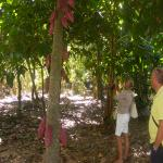 images/stories/Tour-nord-Madagascar/cacao-madagascar.jpg