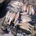 images/stories/Tour-nord-Madagascar/grillade-poisson-diego.jpg