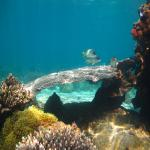 images/stories/komba-tanikely/snorkeling-pmt-tanikely.jpg