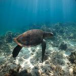 images/stories/komba-tanikely/tortue-verte-pmt-tanikely.jpg