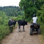 images/stories/quad/quad-nosybe-madagascar.jpg