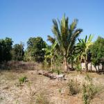 images/stories/sakatia/vegetation-sakatia.jpg